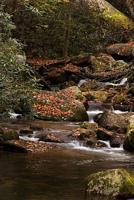 Photograph - Mountain Stream by Cindy Rubin