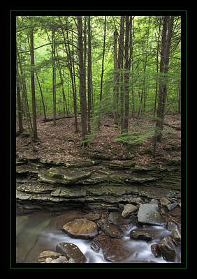 Photograph - Mountain Stream Hemlock Ledges by John Stephens