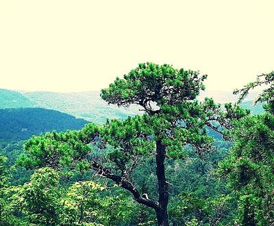 Photograph - Mountain Top Tree Top by Allicat Photography