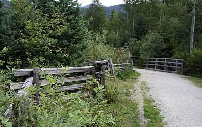 Photograph - Mountain Trail - Whistler by Amanda Holmes Tzafrir