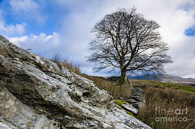 Photograph - Mountain Tree by Trevor Chriss