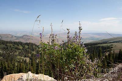 Photograph - Mountain View by Cindy Singleton