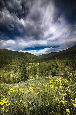 Photograph - Mountain Wildflowers by Garett Gabriel