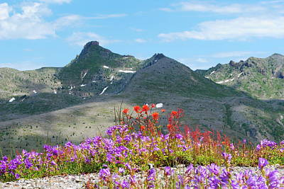 Mountains And Wildflowers Art Print