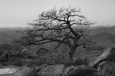 Photograph - Mountaintop Tree by Ricky Barnard