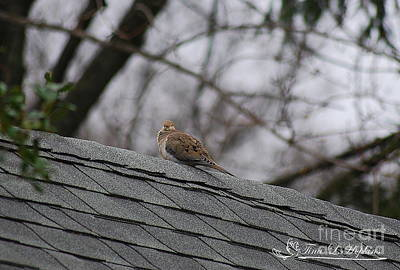 Photograph - Mourning Dove 20120318_2a by Tina Hopkins