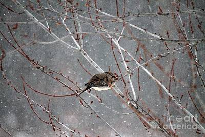 Painting - Mourning Dove Asleep In Snowfall by J McCombie