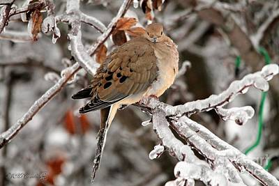 Photograph - Mourning Dove In The Ice Storm by J McCombie