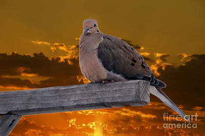 Photograph - Mourning Dove Orange Sky by Marjorie Imbeau