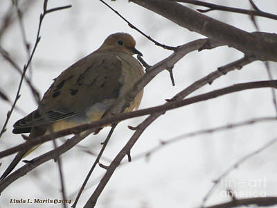 Photograph - Mourning Dove Resting by Linda L Martin