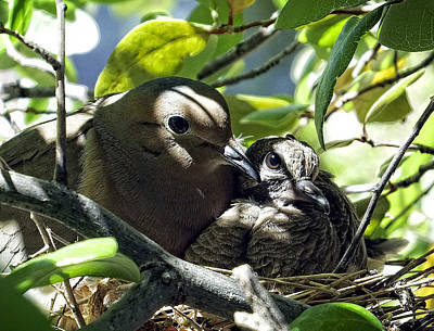 Bird Photograph - Morning Doves Mom And Babe by Kurt Van Wagner