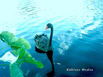 Photograph - Mourning Swan Song by KLM Kathel