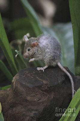 Photograph - Mouse  by David Grant