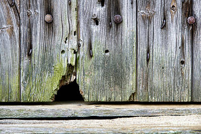 Entrance Door Photograph - Mouse Hole by Olivier Le Queinec
