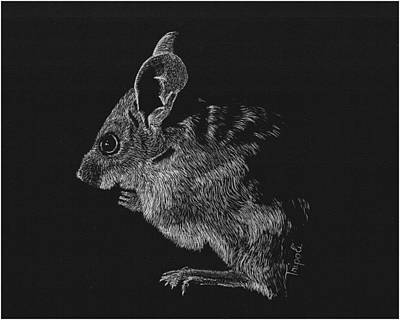 Drawing - Mouse by Lawrence Tripoli