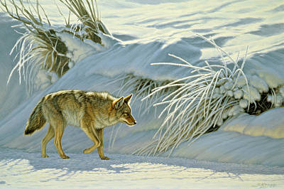 Coyote Painting - Mousing by Paul Krapf