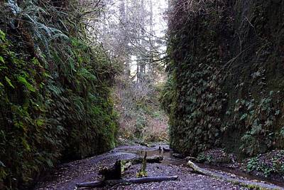 Photograph - Mouth Of Fern Canyon by Michael Courtney