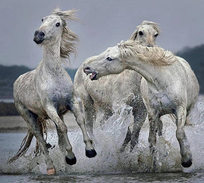Running Horses Photograph - Move Over.... by Paul Keates