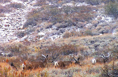 Mule Deer Herd Photograph - Moving On by Marilyn Diaz
