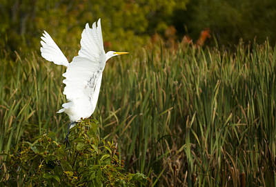 Egret Photograph - Moving On by Robert Smice