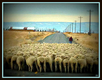 Art Print featuring the photograph Moving Sheep by Heidi Manly