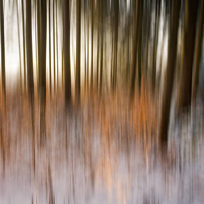 Wall Art - Photograph - Moving Trees by Claus Puhlmann