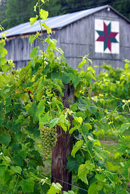 Photograph - Moyer's Vines In Color by Wayne Stacy
