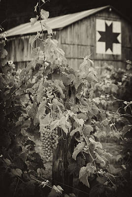 Photograph - Moyer's Vines by Wayne Stacy