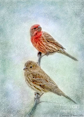 Mr And Mrs House Finch Digital Paint Art Print by Debbie Portwood