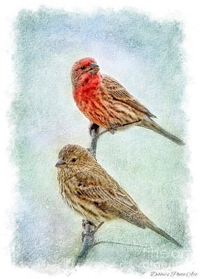 Mr And Mrs House Finch Digital Paint With Frame Art Print by Debbie Portwood