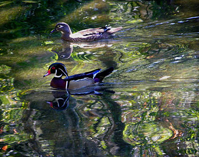 Photograph - Mr And Mrs P W Duck by Judy Wanamaker