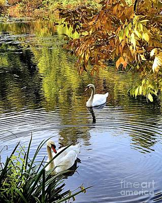 Photograph - Mr And Mrs Swan by Janice Drew