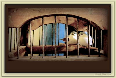Mr. And Mrs Tweety In Sepia  Art Print by Danielle  Parent