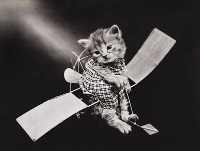 Funny Cat Photograph - Mr Aviator by Aged Pixel