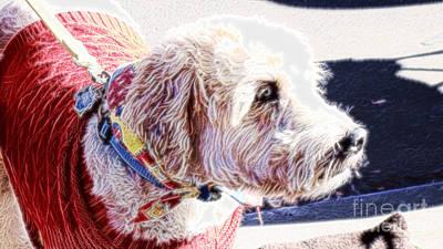 Terrier Digital Art - Mr Bailey by Beverly Guilliams