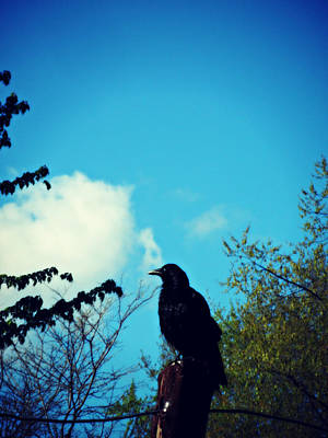 Photograph - Mr Black Bird by Cyryn Fyrcyd