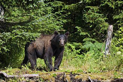 Photograph - Mr. Blackbear by Ted Raynor