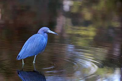 Small Birds Photograph - Mr. Blue by Kitty Ellis