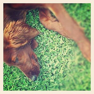 Green Wall Art - Photograph - Mr Dog by Emanuela Carratoni