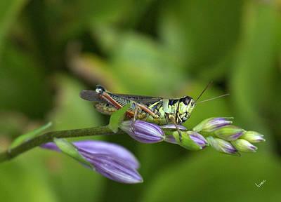 Mr. Grasshopper Art Print by Bruce Carpenter