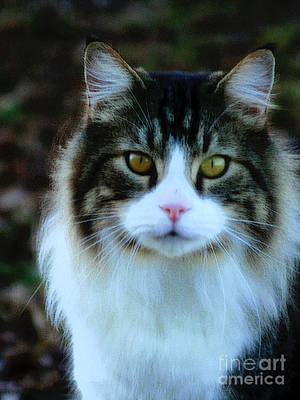 Photograph - Kitty Portrait by Lesa Fine
