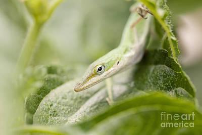 Mr Lizard Art Print by Erin Johnson