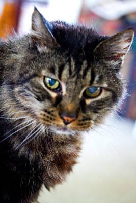 Photograph - Mr. Lynx - Tabby - Cat by Marie Jamieson