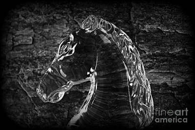 Horses Photograph - Mr Majestic by Clare Bevan