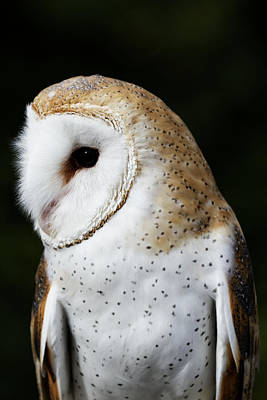 Mr Owl  Art Print