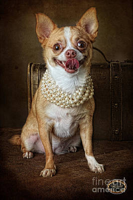 Chiwawa Portrait Wall Art - Photograph - Mr. Personality by Domenico Castaldo
