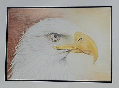 Bald Eagle Pencil Drawing Drawing - Mr. Polite by Parmjit Gill