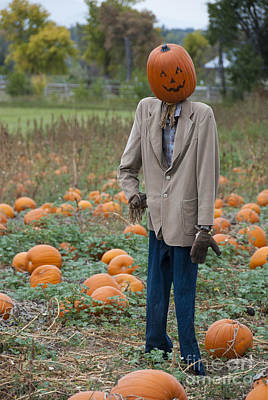 Pumpkin Patch Photograph - Mr. Pumpkin Head by Juli Scalzi