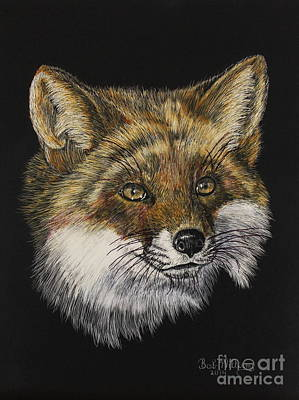 Scratchboard Painting - Mr. Red Fox by Bob Williams