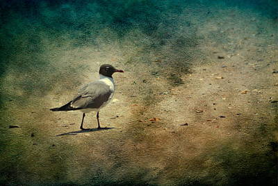 Photograph - Mr. Seagull by Michael Colgate